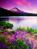 Beautiful Nature QMobile E750 Wallpaper