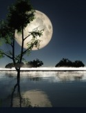 Moon Light QMobile E750 Wallpaper