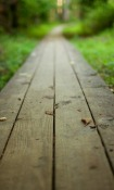 Wood Path  Mobile Phone Wallpaper