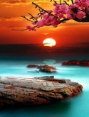 Amazing Sunset  Mobile Phone Wallpaper
