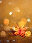 Autumn Leaf LG A390 Wallpaper