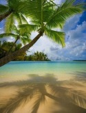 Beach Samsung F500 Wallpaper