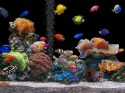 Aquarium  Mobile Phone Wallpaper