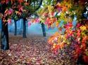 Autumn Colors MegaGate K310 Messenger Wallpaper