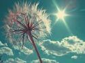 Sun Rays Power  Mobile Phone Wallpaper