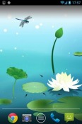 Lotus Pool Wallpaper for QMobile NOIR A10