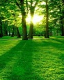 Green Morning Park Unnecto Primo 2G Wallpaper