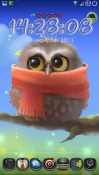 Little Owl Android Mobile Phone Wallpaper