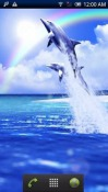 Dolphin Blue Android Mobile Phone Wallpaper