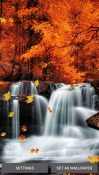 Falling Leaves Android Mobile Phone Wallpaper