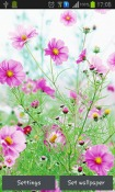 Sweet Flowers Android Mobile Phone Wallpaper