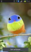 Cute Bird Android Mobile Phone Wallpaper