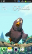 Funny Bird Android Mobile Phone Wallpaper