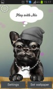 French Bulldog Android Mobile Phone Wallpaper