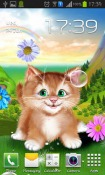 Kitten Android Mobile Phone Wallpaper
