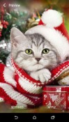Christmas Animals Android Mobile Phone Wallpaper