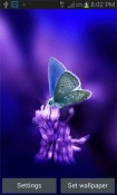 Cute Butterfly Android Mobile Phone Wallpaper