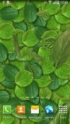 Leaves 3D QMobile Noir A6 Wallpaper