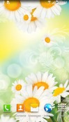 Daisies Android Mobile Phone Wallpaper