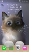 Peper The Kitten Android Mobile Phone Wallpaper