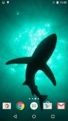 Sharks Realme U1 Wallpaper