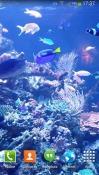 Aquarium HD 2 Android Mobile Phone Wallpaper