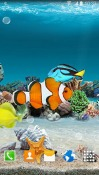 Coral Fish Realme U1 Wallpaper
