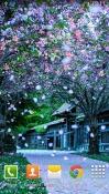 Sakura Realme U1 Wallpaper