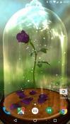 Enchanted Rose QMobile NOIR A10 Wallpaper