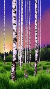 Birch Wood Android Mobile Phone Wallpaper