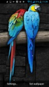Parrot Android Mobile Phone Wallpaper