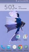 Betta Fish 3D Realme U1 Wallpaper