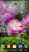 Cherry Blossom QMobile NOIR A10 Wallpaper