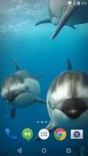 Ocean 3D: Dolphin Samsung Galaxy S8+ Wallpaper