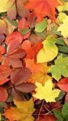 Autumn Celkon Q3K Power Wallpaper