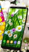 Daisies HQ Samsung Galaxy J7 Duo Wallpaper