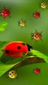 Ladybugs Android Mobile Phone Wallpaper