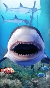 Shark Aquarium Realme U1 Wallpaper