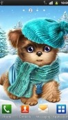 Cute And Sweet Puppy: Dress Him Up Realme U1 Wallpaper