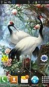 White Birds Alcatel 1x (2019) Wallpaper