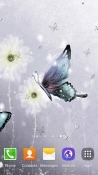Butterfly Energizer Power Max P8100S Wallpaper