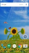 Sunflower 3D Motorola One Action Wallpaper