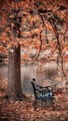 Autumn Micromax Canvas Infinity Pro Wallpaper
