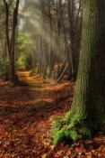 Forest Micromax Canvas Infinity Pro Wallpaper