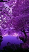 Purple Tree Motorola One Action Wallpaper