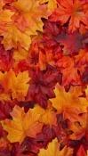 Leaves Celkon A402 Wallpaper