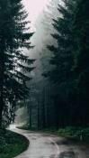 Forest Road iNew I8000 Wallpaper