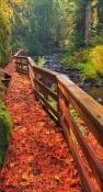 Autumn Bridge Celkon Q3K Power Wallpaper