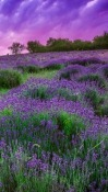 Purple Garden Lenovo Tab3 10 Wallpaper